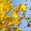 Autumn leaves against the blue sky — Stock Photo