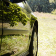 Stock Photo: Car with reflections of green trees in sunny glade.