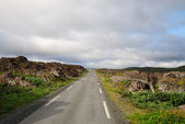 Road to Hamningberg in summer. — Stock Photo