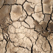 Stock Photo: Close-up of scorched earth.
