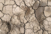 Close-up of scorched earth. — Stock Photo