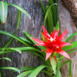 Large red flower of green plant against old tree trunk. — Stock Photo #11005769