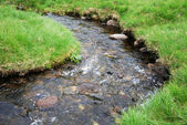 Meandering stream in green grass. — Stock Photo