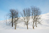Bare trees against snow slope and blue sky. — Stock Photo