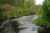 Rapid river in taiga forest, Juuma, Finland — Stock Photo