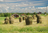 Finnish country landscape with vintage haystacks — Stock Photo