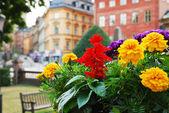 Vista di stoccolma con fiori in primo piano — Foto Stock