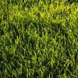 Green background of sunlit grass — Stock Photo