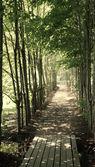 Caminho sombrio, ladeado de árvores jovens — Fotografia Stock
