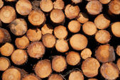 Close-up of wood stack. Timber backgrounds. — Stock Photo