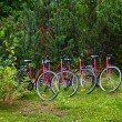 Stock Photo: Cycles in forest