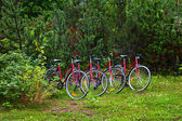 Cycles in forest — Stock Photo