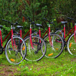 Stock Photo: Cycles in forest-2