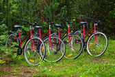 Cycles in forest-2 — Stock Photo