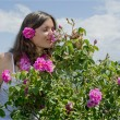 Beautiful girl smelling a rose in a field of roses — Stock Photo