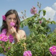 Beautiful girl smelling a rose in rose field — Stock Photo