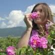 Beautiful girl smelling a rose in a rose field — Stock Photo
