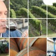 Montage of wine production - Stock Photo
