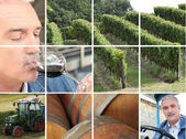 Montage of wine production — Stock Photo