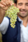 Man with bunch of grapes — Stock Photo