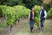 Couple posing in a vineyard — Stockfoto