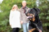 Senior couple walking dog — Стоковое фото