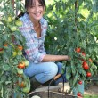 Woman growing vegetables — Stock Photo