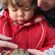 Father showing a turtle to his son — 图库照片