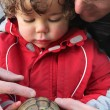 Father showing a turtle to his son - Stock Photo