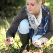 Woman gathering wild mushrooms - Stock Photo
