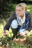 Woman gathering wild mushrooms — Stock Photo