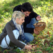 Couple picking mushrooms - Stockfoto