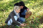 Couple picking mushrooms — Stock Photo