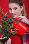 Woman watering bonsai — Stock Photo