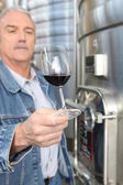 Winemaker with a glass of wine — Stock Photo