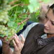 Stock Photo: Woman picking grapes