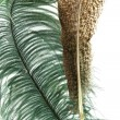 Two exotic bird feathers — Stock Photo