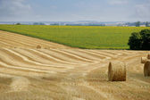 Hay rolls in a field — Stock Photo