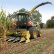 Stock Photo: Combine harvester in a corn field