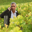 Man on a phone in a vineyard — Stock Photo
