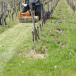 A tractor mowing grass in the vines — Stockfoto