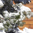 Snowy tree in front of chalet — Stock fotografie