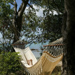 Stock Photo: Beach front hammock