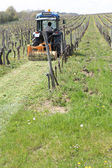 A tractor mowing grass in the vines — Stok fotoğraf