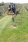 Een trekker maaien gras in de wijnstokken — Stockfoto