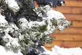 Snowy tree in front of chalet — Stock Photo