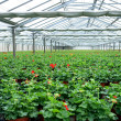 Plants in a green house — Stock Photo #11485854