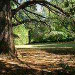 Tree casting a shadow — Stock Photo