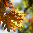 Autumn leaves — Stock Photo #11485911