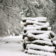 Snow covered firewood — Stock Photo #11485957